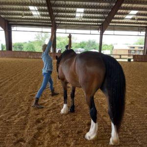 irest-horse-4
